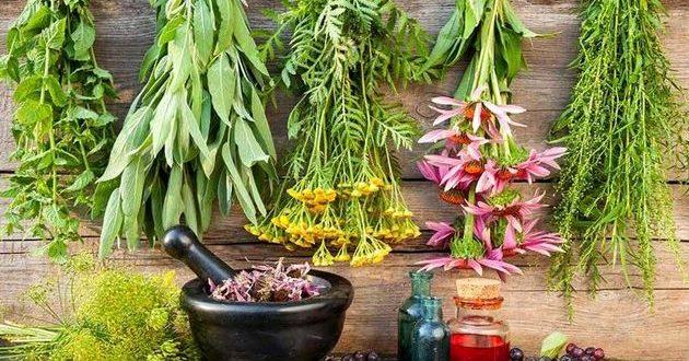 تفاوت گیاهان دارویی و داروهای گیاهی
