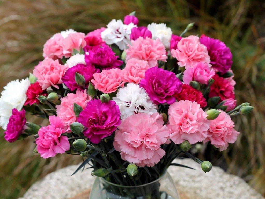 خواص گل میخک در طب سنتی