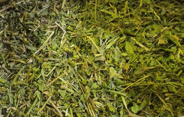طریقه و میزان مصرف گیاه سداب و مضرات آن