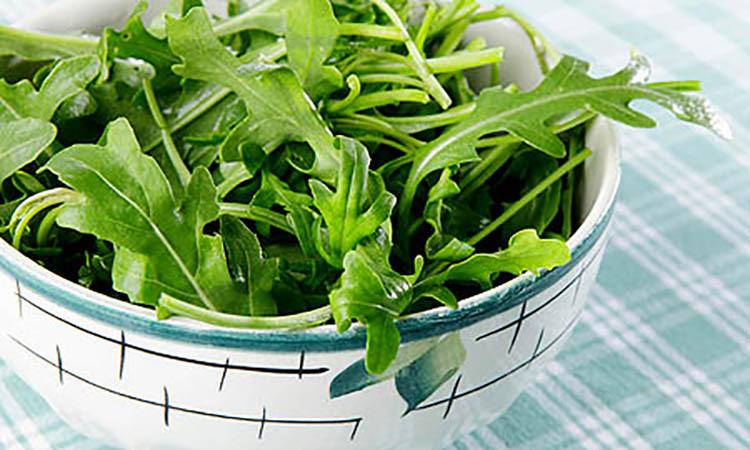 خواص درمانی و عوارض جانبی گیاه منداب
