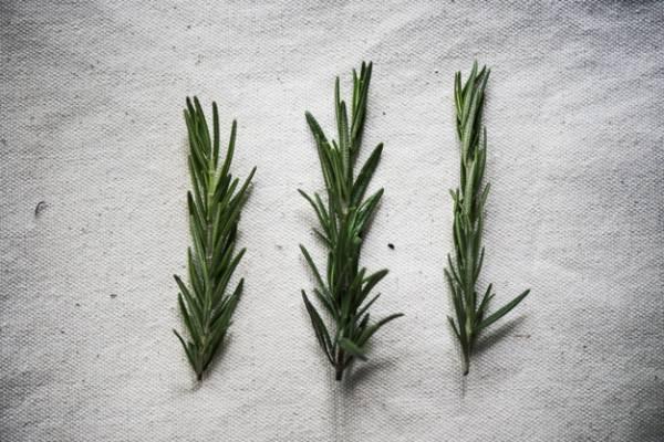 کل خواص و فواید گیاه رزماری برای درمان و زیبایی